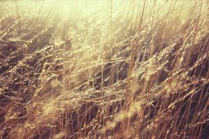 grass-835270_1280